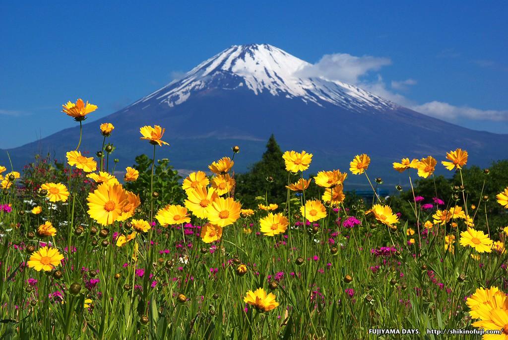 富士山と花の都公園