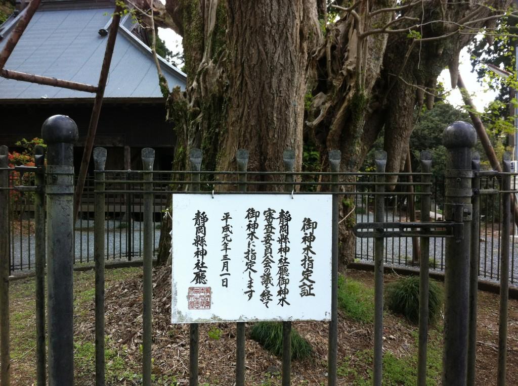 村山浅間神社の御神木