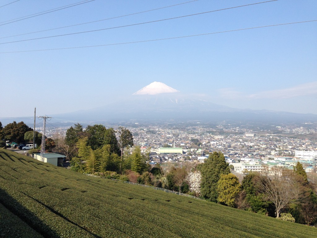 富士山麓の茶畑