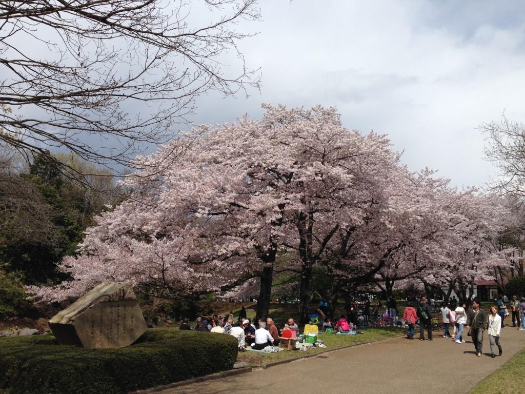 岩本山の桜