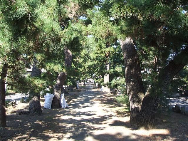 御穂神社から三保の松原への松の道